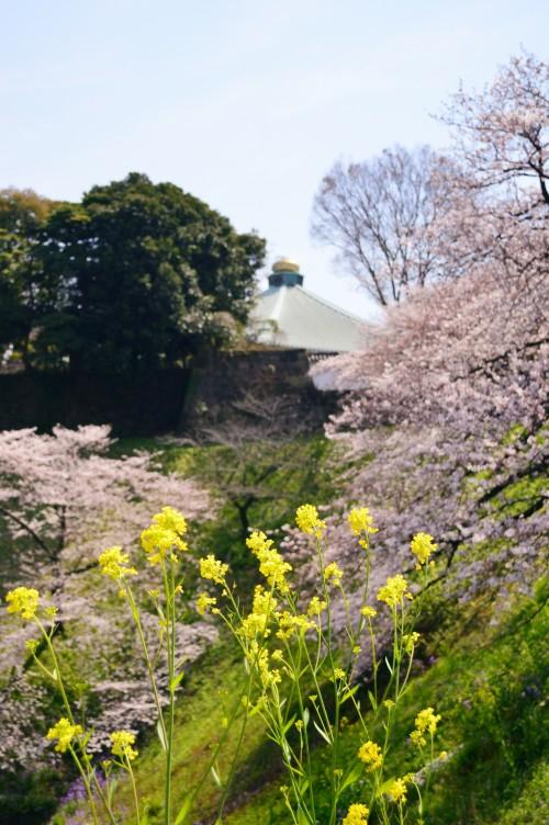 千鳥ケ淵から、武道館を写す