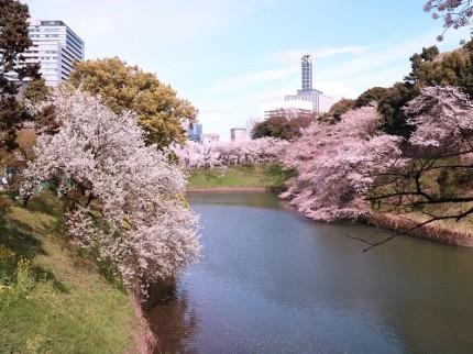 千鳥ヶ淵・北の丸の桜
