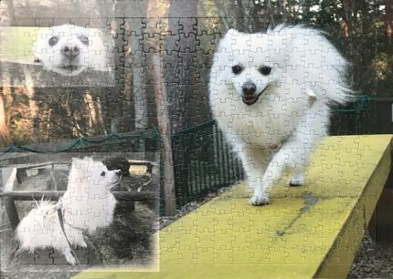 ペットのパズル