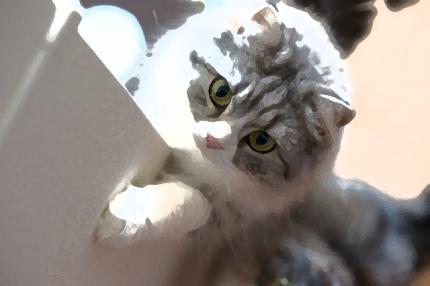 イラスト集_猫