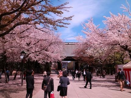 靖国神社境内,さくら,桜