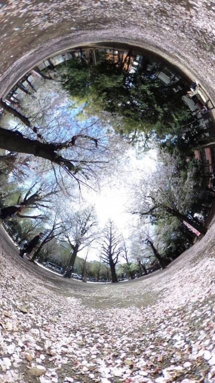 桜,360度カメラ